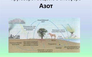 Основы экологии (биосфера): фотосинтез, круговорот воды, азота, углерода, энергии